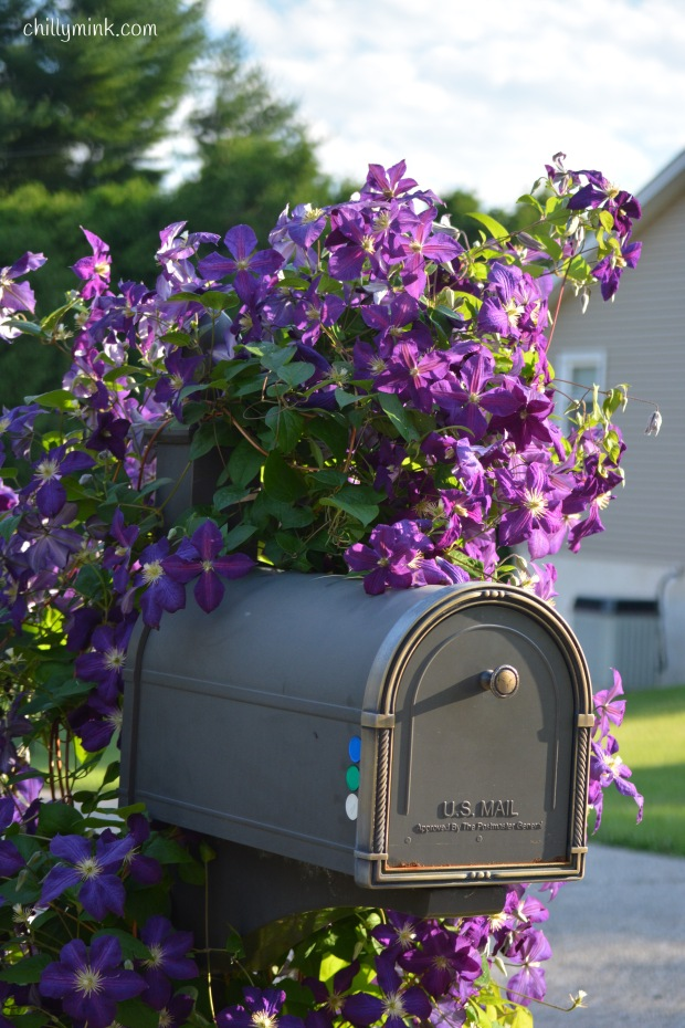 CM Most beautiful mailbox