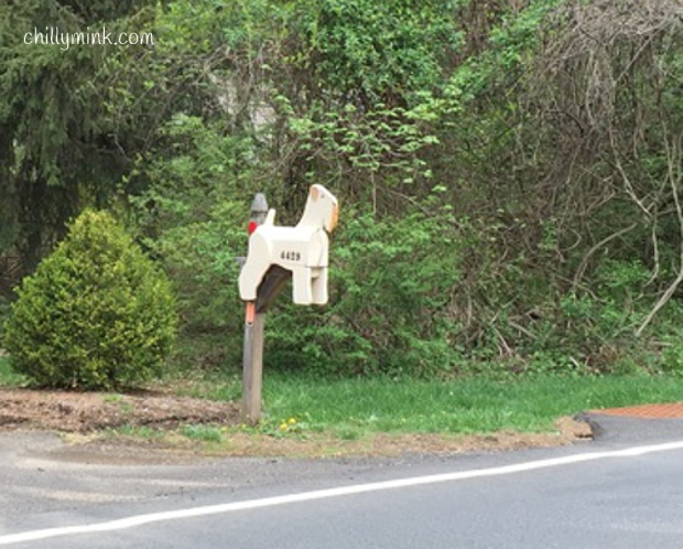 CM zoom NJ dog mailbox