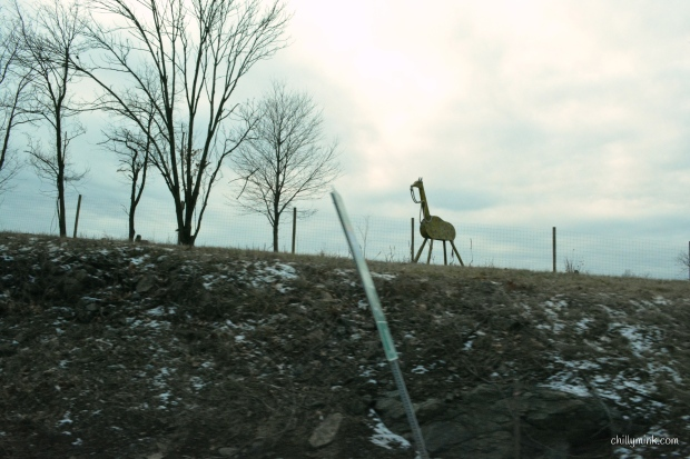 cm-giraffe-from-car-cloudy-fotor