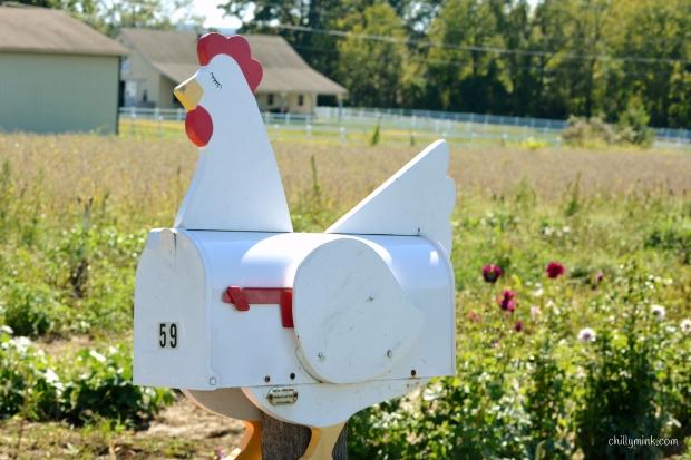 cm-hex-barn-hen-mailbox-fotor