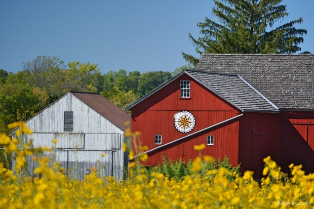 cm-hex-barn-yellow-flower-fotor