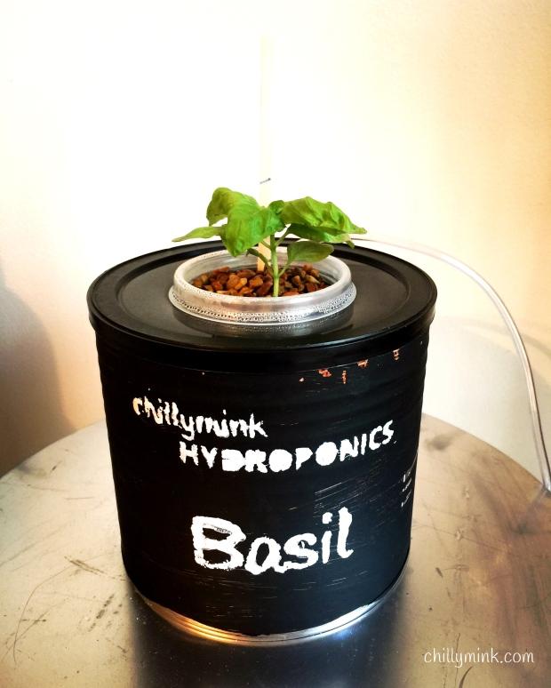 cm-hydroponics-basil_fotor